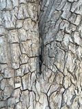Gnarled tree trunk Stock Photo