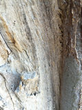 Gnarled tree trunk background Royalty Free Stock Images