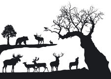 Gnarled tree and wildlife