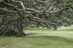 Gnarled and twisted branches of trees over park benches giving a Royalty Free Stock Photos