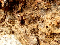 Gnarled wood Stock Photos