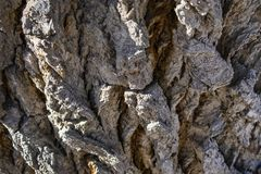 Gnarls e ata de uma árvore velha de Wisened foto de stock royalty free