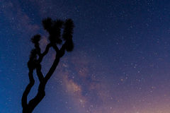 A Gnarly Joshua Tree is Silhouetted by the Milk Way Royalty Free Stock Photo