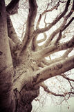 Gnarly Old Barren Tree. An old, gnarly looking tree sits against a gray sky Royalty Free Stock Photos