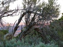 Gnarly träd Arkivbild