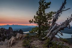 Gnarly Tree Sits Atop Paulina Peak at Sunset. In summer Royalty Free Stock Photo