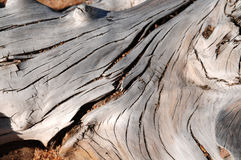Gnarly wood texture Stock Photography