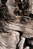 Gnarly wood texture Royalty Free Stock Images