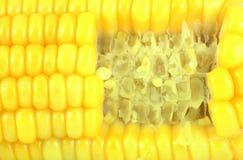 Gnaw marks corn. Yellow vegetable stock photo