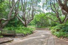 Gångbana i de Kirstenbosch medborgarebotaniska trädgårdarna Arkivbild