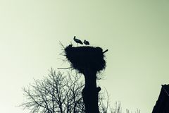 Gniazdeczko bociany na drzewie w wiosce zdjęcia stock
