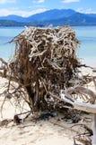 Gniazdeczko Denny Eagle na plaży fotografia stock