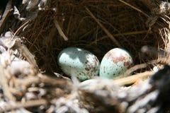 Gniazdeczko i jajka Fotografia Royalty Free
