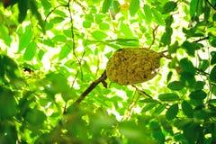 Gniazdeczko insekty Obraz Royalty Free