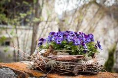 Gniazdeczko kwiaty Obraz Stock