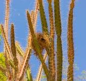 Gniazdeczko ochraniający naturą w zwrotnikach obraz stock
