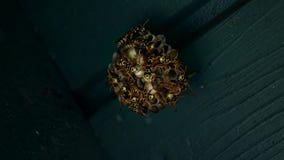 Gniazdeczko osy zbiory