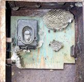 Gniazdeczko osy w starym elektrycznym switchboard Osy polist Obraz Stock