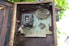 Gniazdeczko osy w starym elektrycznym switchboard Osy polist Zdjęcie Stock