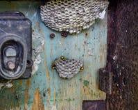 Gniazdeczko osy w starym elektrycznym switchboard Osy polist Zdjęcia Stock