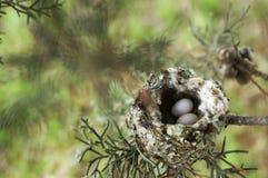 Gniazdeczko w drzewie obrazy stock
