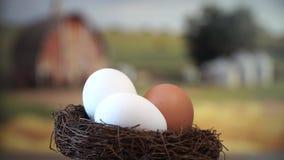 Gniazdeczko z jajkami zdjęcie wideo