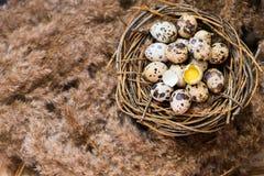 Gniazdeczko z jajkami przepiórki Zdjęcia Royalty Free