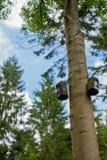 Gniazdować pudełka w Millington drewnach Obrazy Royalty Free