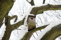Gniazdować pudełko na śnieg zakrywającym drzewie Zdjęcie Stock