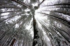 Gniazdować pudełkowatego obwieszenie na drzewie obrazy royalty free