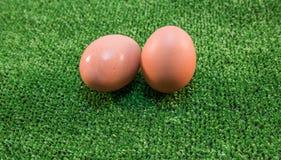 Gniazdowego jajka jedzenia gospodarstwa rolnego śniadanie Zdjęcie Stock