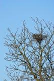 gniazdowy drzewo Fotografia Royalty Free