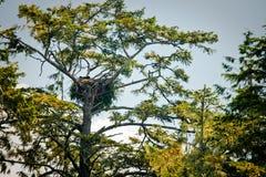 gniazdowy drzewo Zdjęcie Stock