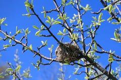 gniazdowy ptaka drzewo s Fotografia Royalty Free
