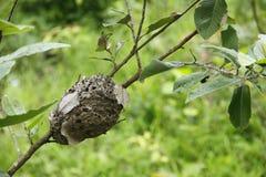 gniazduje termitu Obrazy Stock