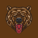 Gniewna Niedźwiadkowa twarz Zdjęcie Royalty Free