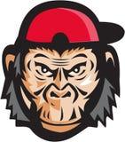 Gniewna szympans głowy baseballa nakrętka Retro Obrazy Stock