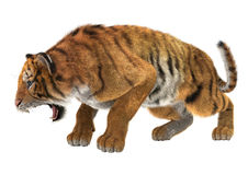 (1) 2 gniewnego czarny koloru halftone tygrysi wersi biel Zdjęcie Stock