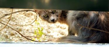 Gniewni kotów zwroty Obraz Stock