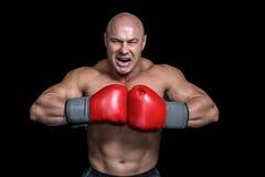 Gniewny łysy bokser z uderzać pięścią rękawiczki fotografia stock
