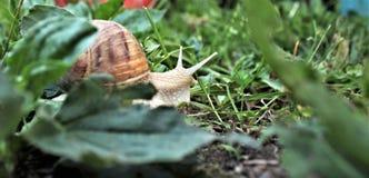 Gniewny ślimaczek biega daleko zdjęcia stock