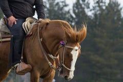Gniewny brown koń Fotografia Royalty Free