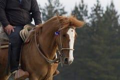 Gniewny brown koń Obrazy Royalty Free