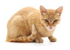 Gniewny czerwony kot obrazy royalty free