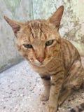 Gniewny kot zdjęcia royalty free