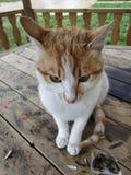 Gniewny kot obrazy royalty free