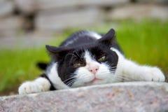 gniewny kot Zdjęcia Stock