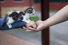 Gniewny kot Fotografia Royalty Free
