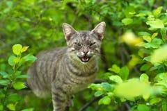 Gniewny kot na drzewie obraz stock