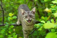 Gniewny kot na drzewie fotografia stock